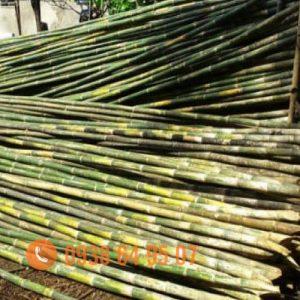 chỗ bán cây tầm vông nguyên liệu