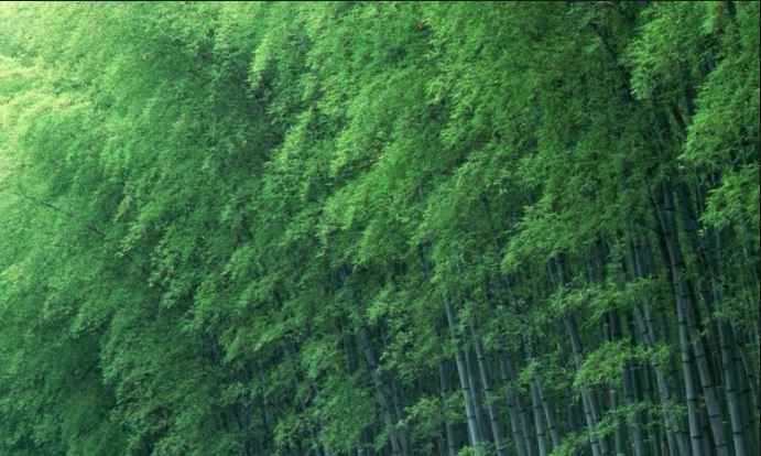 Cây Tre có đặc điểm hình thái