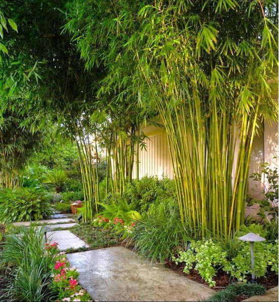 Kiến trúc tre xanh trong thiết kế sân vườn 1