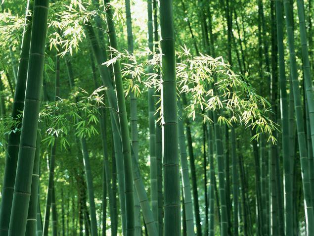 Tre mọc rất nhiều ở khắp nơi. Tại Việt Nam, có 150 loài tre với hàng triệu ha rừng tre ở khắp mọi nơi