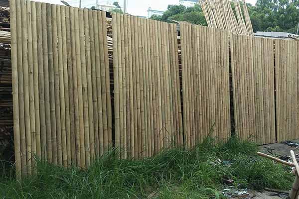 Banner hàng rào tre trúc