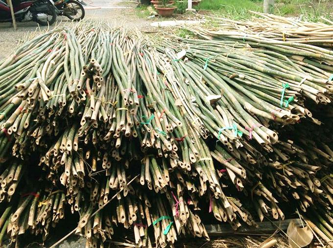 Hình ảnh cây tre dùng để đan mê bồ
