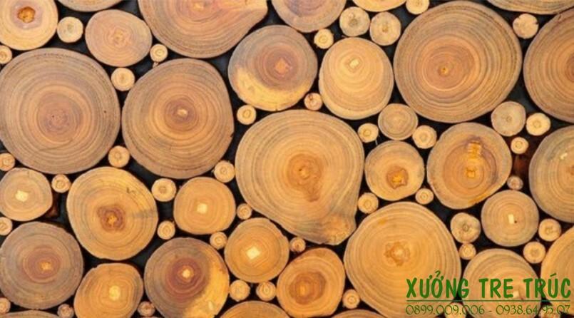 Cây Keo - Đặc điểm và công dụng của cây keo 5