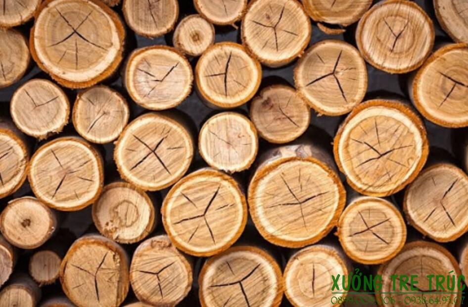 Cây Keo - Đặc điểm và công dụng của cây keo 4